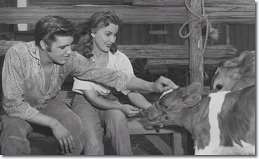 Elvis always had a love for animals. Here, he and co-star Debra Paget take a break from filming 'Love Me Tender'